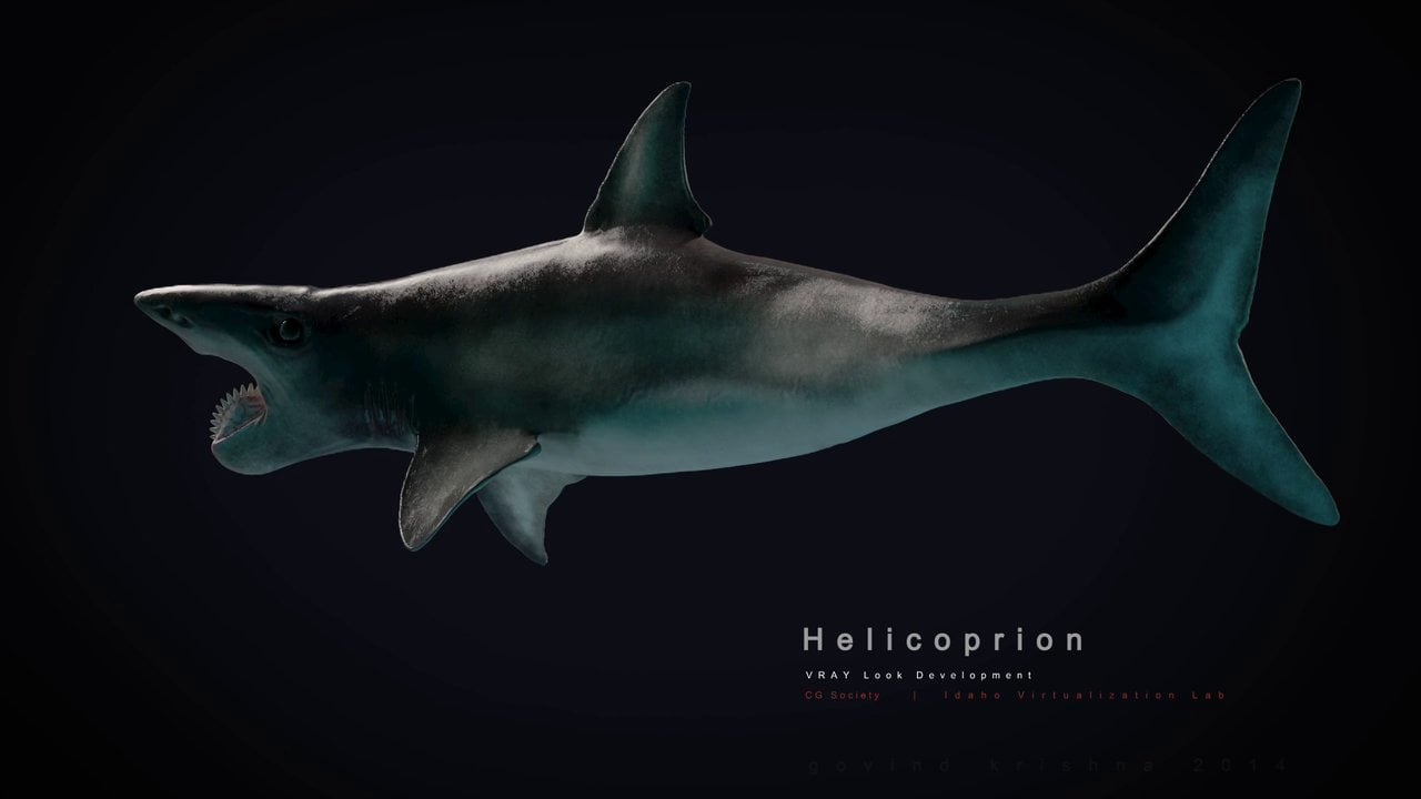 Helicoprion (loop back & forth)