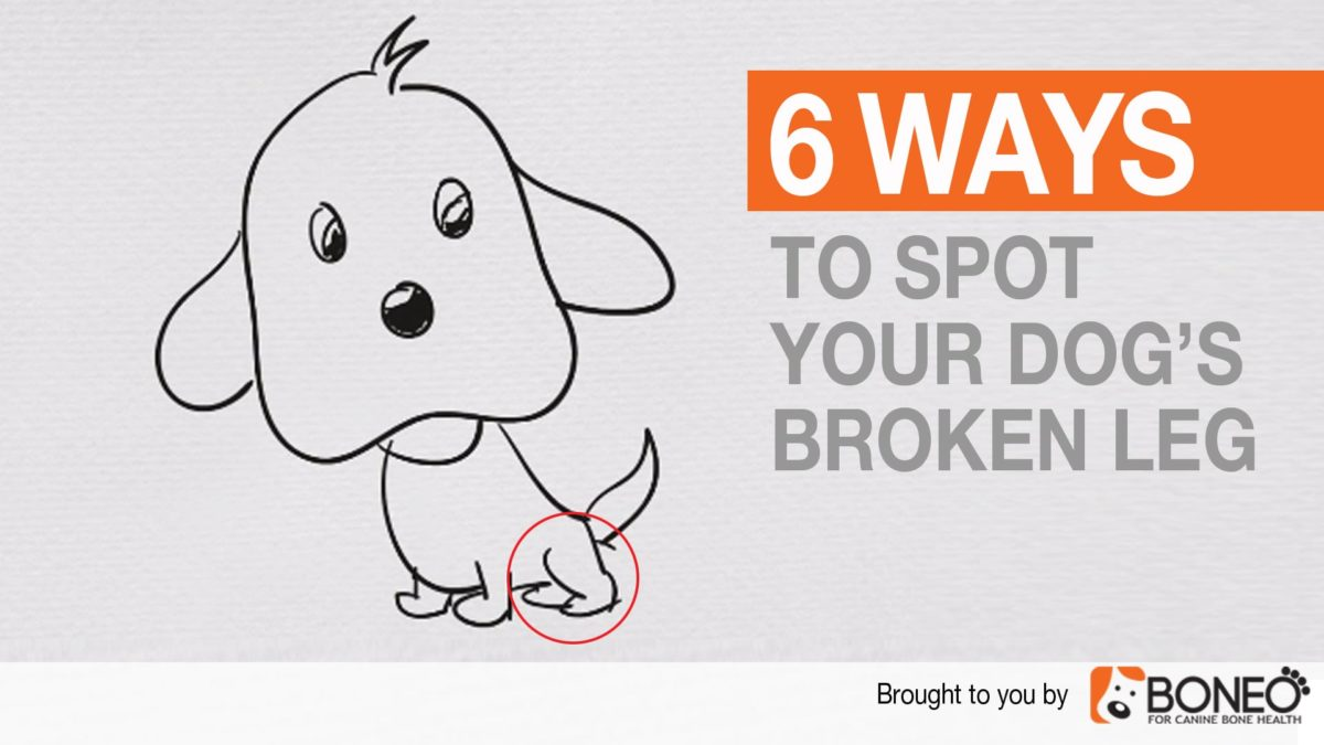 Six Ways to Spot Your Dog's Broken Leg – Dog Broken Leg Symptoms