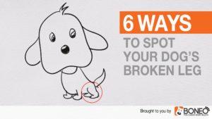 Six Ways to Spot Your Dog's Broken Leg – Dog Broken Leg Symptoms