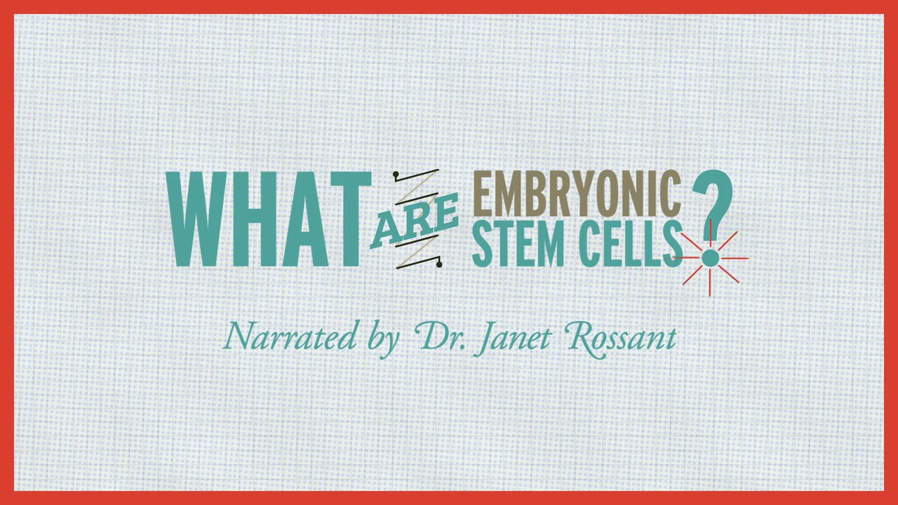 What are embryonic stem cells? Narrated by Dr. Janet Rossant