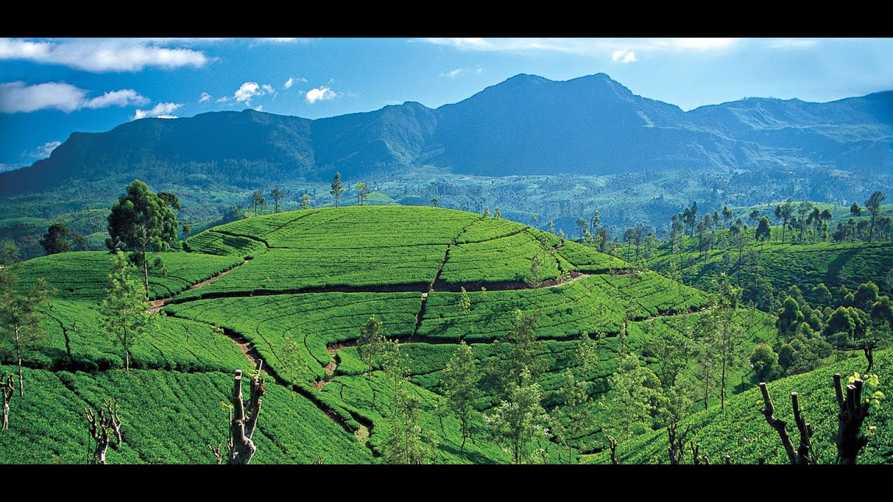 Szabi and Cris – Reality or Dream. Sri-Lanka